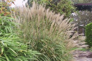 Ecological planting design _ dirk de winter _ new generations plants _ kwekerij de morgen Miscanthus sinensis 'Silverstripe'